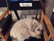 smudgedirectorschair