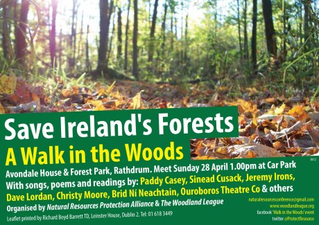 save irelands forests a walk in the woods